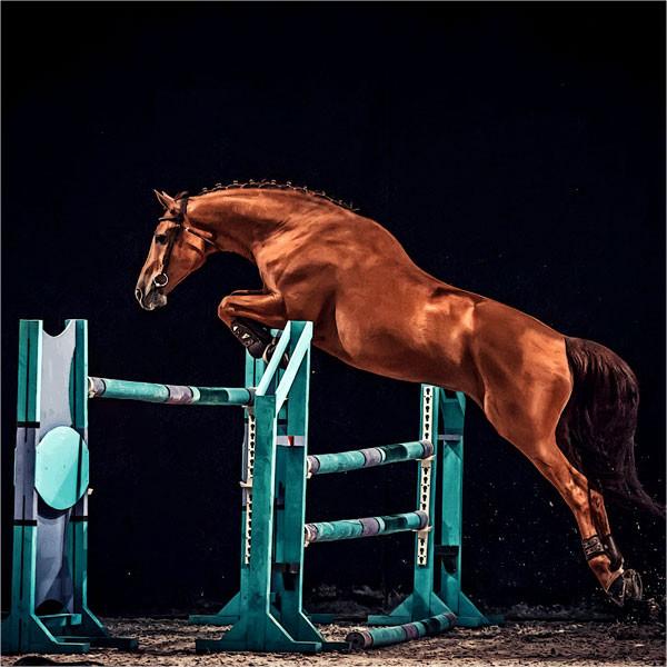 equinova-ratgeber-energieAekjEJd8dvWWb