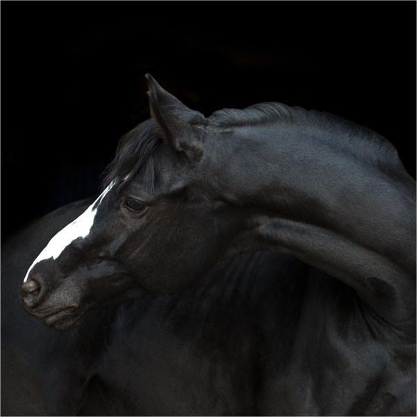 equinova-ratgeber-lebergIykUYTDnA36b