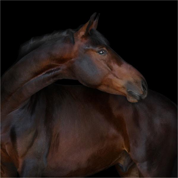 equinova-ratgeber-magengeschwuere