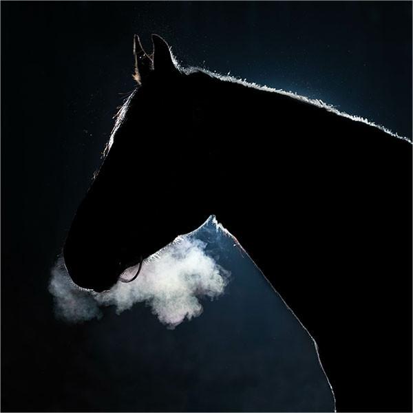 equinova-ratgeber-atemwegserkrankungen