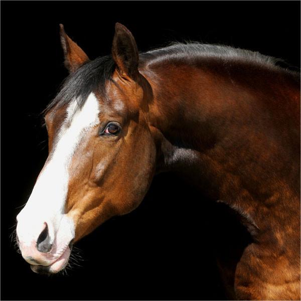 equinova-ratgeber-muskulatur14bJ4Yk8M97aw